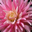 Pink Lady by vbk70