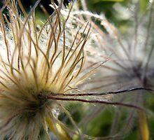 Fuzzy Flower by BekahCat