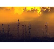 greeting the new day's dawn... Photographic Print
