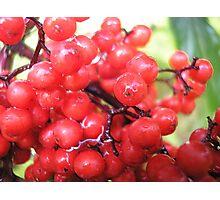 Wildberries Photographic Print