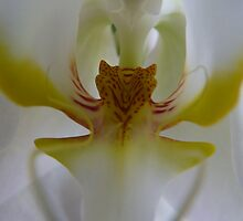 Angelic orchid with a wild heart by Photos - Pauline Wherrell