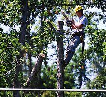 Timber!! by barnsis