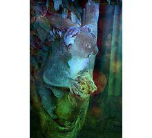 Koala Has Seen Things Photographic Print