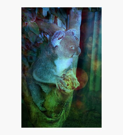 Koala Has Seen Things Photographic Print