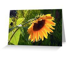 Sunflower - Helianthus  Greeting Card