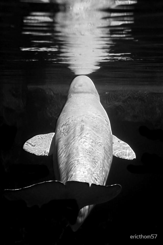 Beluga by ericthom57
