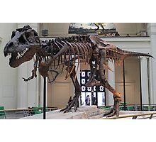 Random Tyrannosaurus Photographic Print