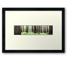 Avenue of Giants Framed Print