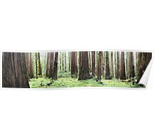 Avenue of Giants Poster