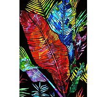 colourful leaves Photographic Print