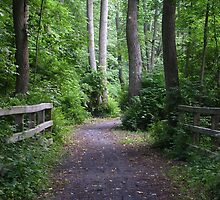 Catharine Valley Trail 2 by Mark  Reep