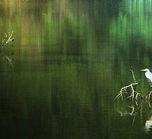 Egrets In Reflection by DottieDees