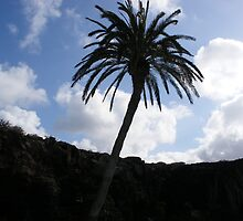Palm tree in Lanzarote. by Fara