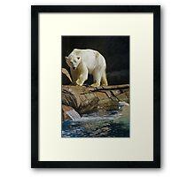 Com'on In! Polar Bear Water Fun Framed Print