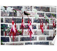 Tinkerbell Lanterns Poster