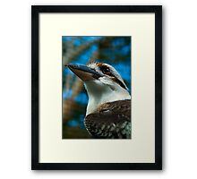 Where the Kookaburras Call  Framed Print
