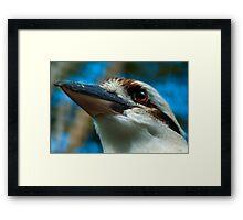 Kookaburra Detail Framed Print