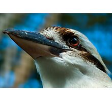 Kookaburra Detail Photographic Print