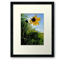 Good Morning Sunshine ! Framed Print