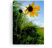 Good Morning Sunshine ! Canvas Print