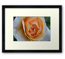 Rosey Framed Print