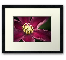 Clematis (Sunset) Framed Print