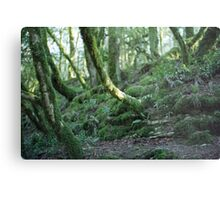 Mysterious forest in Sochi, Russia Metal Print