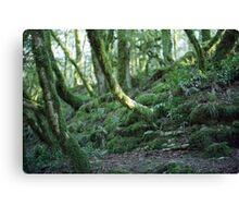 Mysterious forest in Sochi, Russia Canvas Print