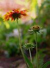 Summer Flowers by Lucinda Walter