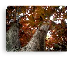 Forest Red Canvas Print