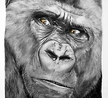 Silverback Gorilla by charly