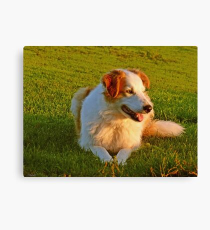 Milly in the Morning Light Canvas Print