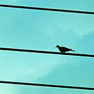 Little bird sat on a powerline. by queenxtc