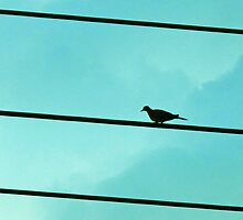 Little bird sat on a powerline. by queenxtc