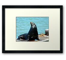 The ham Framed Print