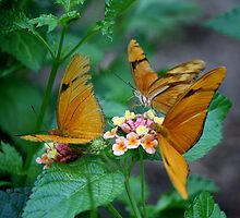 Butterflies by Paulette1021