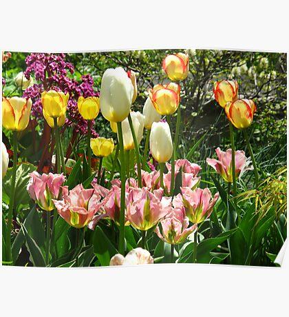 Tulip frenzy Poster