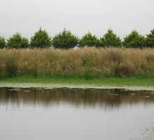 Nature's Symmetry, Trees and reeds reflections in the dam by minerva10