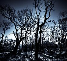Burnt Woodlands by MarcRusso