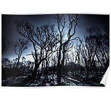 Burnt Woodlands Poster