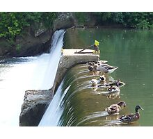 Waterfowl And Waterfalls Photographic Print