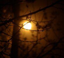 Midnight Sun by BradAndGayna