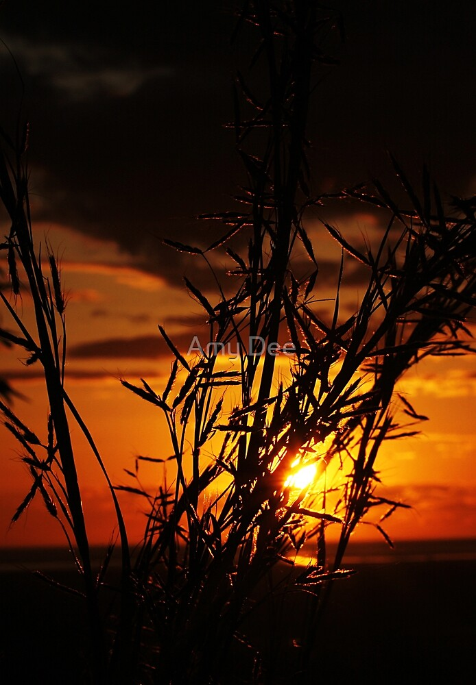 Golden by Amy Dee