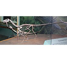 Funky Coelophysis Photographic Print