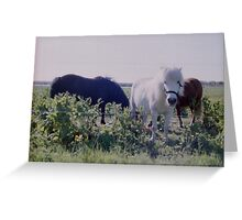 Horses grazing on green meadows Greeting Card