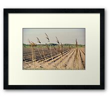 Reed in the wind Framed Print