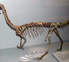 Random Coelophysis by skeletonsrus