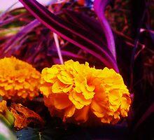 Marigolds in Purple by Corinne Buescher