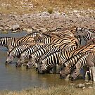 Etosha National Park Zebras' by IngridSonja
