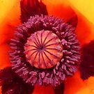 Inside A Poppy by Vicki Spindler (VHS Photography)